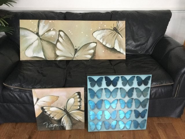 3 butterfly pictures